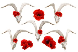 Goat white skull and red poppies. Boho clip art set on white background