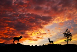 goats under red sky