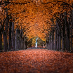 Godollo, Hungary - Narrow alley in Elisabeth park surronded by colorful red and yellow linden trees at autumn. Ground is fully covered with autumn foliage