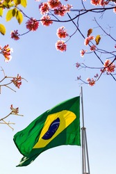 GOIÂNIA GOIAS BRAZIL - JULY 14 2021:  Brazilian flag fluttering in the wind between branches of a tree, with blue sky in the background.
