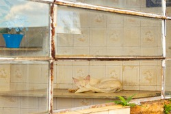 GOIANIA GOIAS BRAZIL - JANUARY 05 2021:  A cat sleeping inside a cemetery room seen through a window. Abandoned cat. Street animal.
