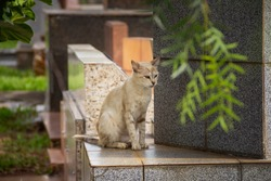 GOIANIA GOIAS BRAZIL - JANUARY 12 2021:  Abandoned cat. Abandoned cat in a cemetery in the city of Goiânia. White cat with spots, sitting among graves.