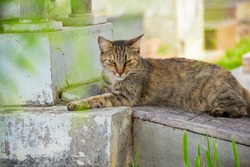 GOIANIA GOIAS BRAZIL - JANUARY 12 2021:  Abandoned cat. Abandoned cat in a cemetery in the city of Goiânia. Tabby cat lying on a grave.