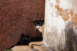 GOIANIA GOIAS BRAZIL - JANUARY 05 2021:  2 cats hidden between walls of houses. Abandoned cat. Street animal.