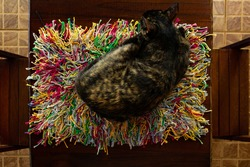 GOIANIA GOIAS BRAZIL - MAY 11 2021:  A turtle-shell cat sleeping on a colorful rug on a wooden table.