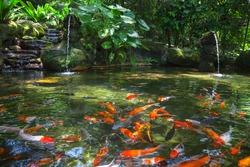 Gold carp in the pond, KL Bird Park, Malaysia