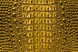 Gold Crocodile bone skin texture background.
