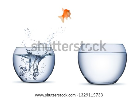 gold fish change move career opportunity rise concept jump into other bigger bowl isolated on white background #1329115733