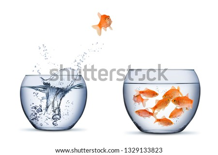 gold fish change move retrun separartion family teamwork concept jump into other bigger bowl isolated on white background #1329133823