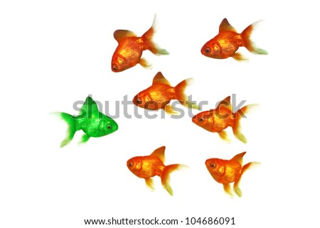 Gold fish group one being green , being different,standing out from the crowd concept