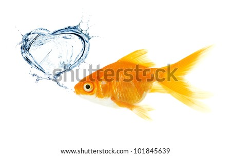 Gold fish. heart made from splash