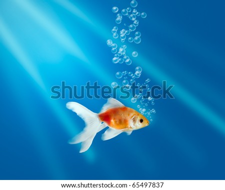 Gold fish in aquarium with water-bubbles and rays of light