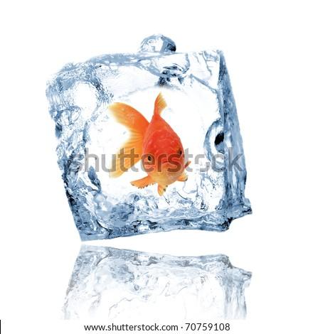 Gold fish in ice cube