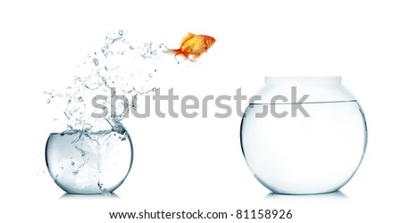 Gold fish jumping out of water in fishbowl stock photo