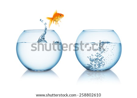 gold fish jumps in to a fishbowl with hot water stock photo
