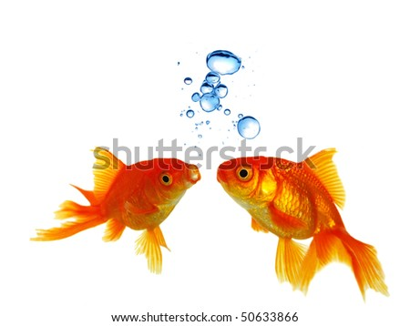 Gold Fishes Photos Gold fishes with bubbles