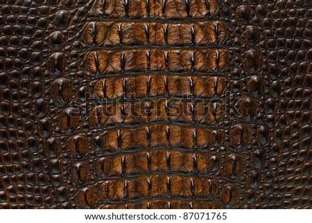 stock photo : Gold Freshwater crocodile bone skin texture background.