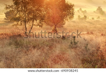 gold glowing morning on autumn meadow with birches #690938245