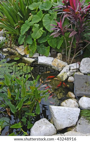 Gold Japanese Koi in a colorful botanical garden setting.  Lily pads and beautiful red and green plants above the rocks surrounding beautiful pond.