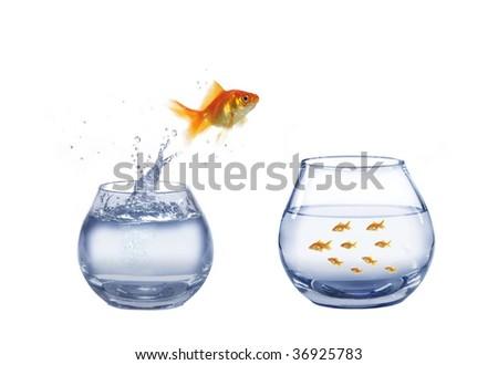 Gold Jump Over To Larger Aquarium Fish Ez Canvas