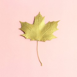 Gold maple leaf  on pastel pink background. Hand painted leaf. Autumn, fall concept.