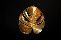 Gold monstera leaf isolated on a black background. top view. floral card. poster.