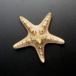 gold sea shell, starfish, golden conch isolated on black background.