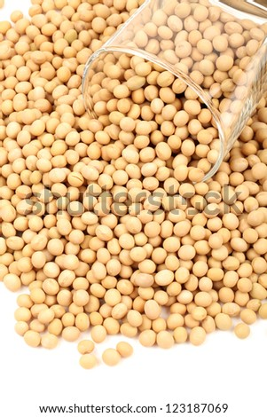 gold soybean isolated on white background