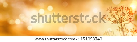 Stock Photo Golden abstract bokeh background with autumn flowers