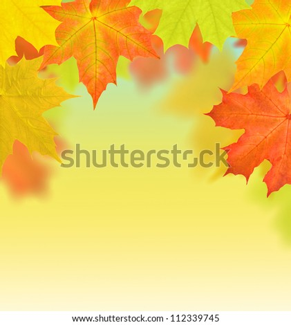 golden and red autumn maple leaves background