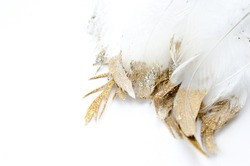 golden and silver glitter feathers on white background