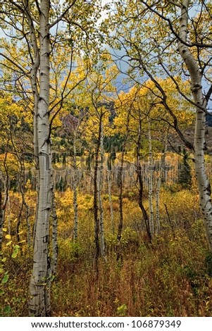 golden aspen and mountain meadow/A Walk on the Trail