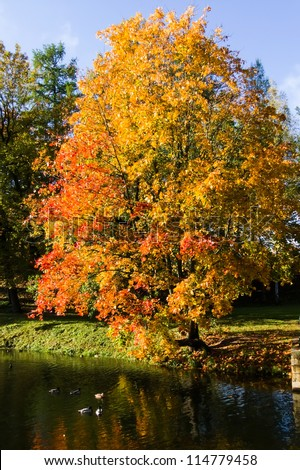golden autumn autumn landscape reflected in water