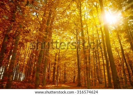 Golden autumn, Autumn Trees Leaves Fall #316574624