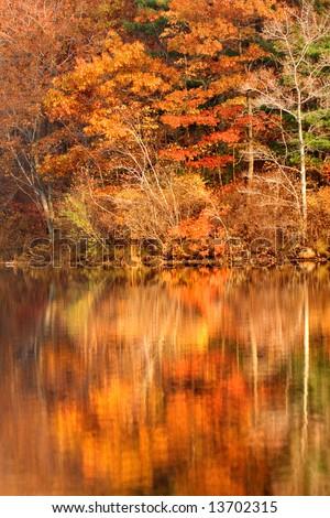 Golden autumn foliage around New Jersey lake in Appalachian mountains