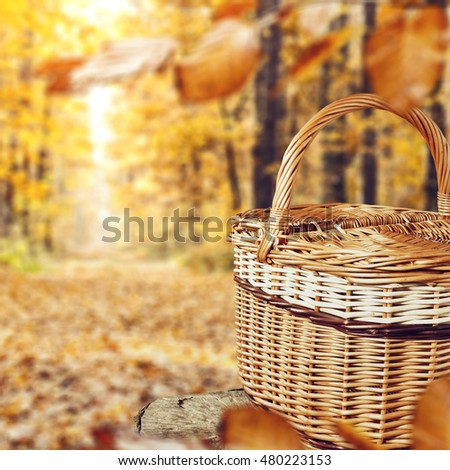 golden autumn forest background and free space for your promotional product  #480223153