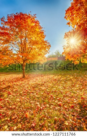 Golden autumn in the city park. Minsk. Republic of Belarus. #1227111766