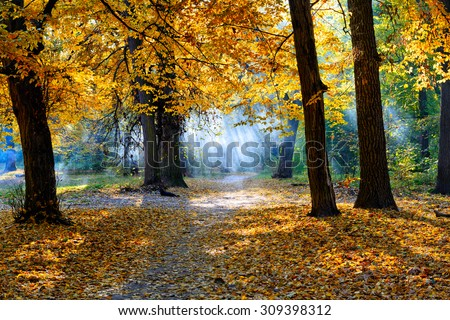 Golden autumn in the park with yellow leaves, smoke and sun rays - Shutterstock ID 309398312