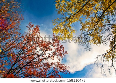 Golden autumn landscape with deciduous trees against the sky in Sunny weather.
