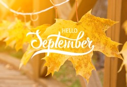 Golden autumn maple leaves. Great season texture with fall mood. Nature autumn  background with hand lettering Hello September.