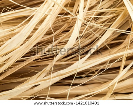 Golden, beige, yellow Raffia fiber gathered for making a Hawaiian flower crown, also known as a haku lei. The fiber comes from R. taedigera or raphia taedigera, native to south america. Craft concept. Photo stock ©