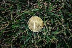 Golden Bitcoin Coin on clump of green grass background. Financial Crisis concept Bitcoin cryptocurrency.
