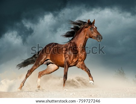 golden brown andalusian horse runs free in the desert