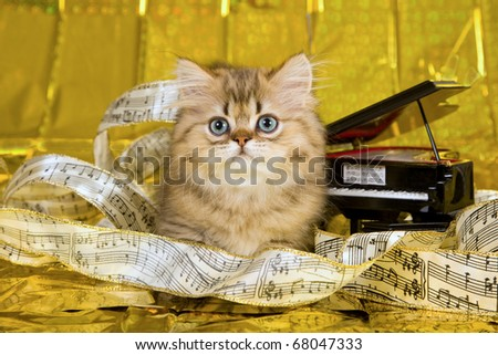 Golden Chinchilla Persian kitten lying on gold foil background with ribbon of musical notes and miniature grand piano