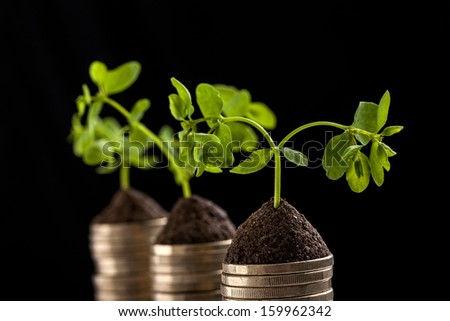 Golden coins and plant - money growth concept. Dark background