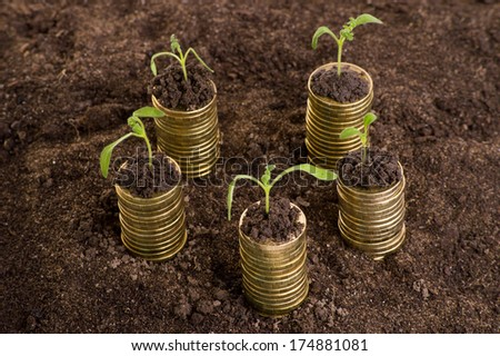 Golden coins with young plant. Money growth concept.