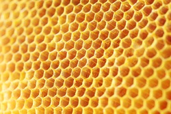 golden color honey comb as background.