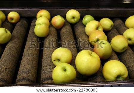 Golden Delicious Apples on a sorting table in a warehouse