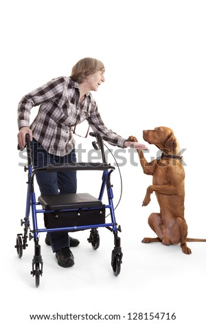 golden dog on rear legs hods paw in the palm of a disabled person with a walking aid