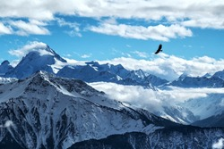 Golden eagle flying in front of swiss alps scenery. Winter mountains. Bird silhouette. Beautiful nature scenery in winter. Mountain covered by snow, glacier. Panoramatic view, Switzerland